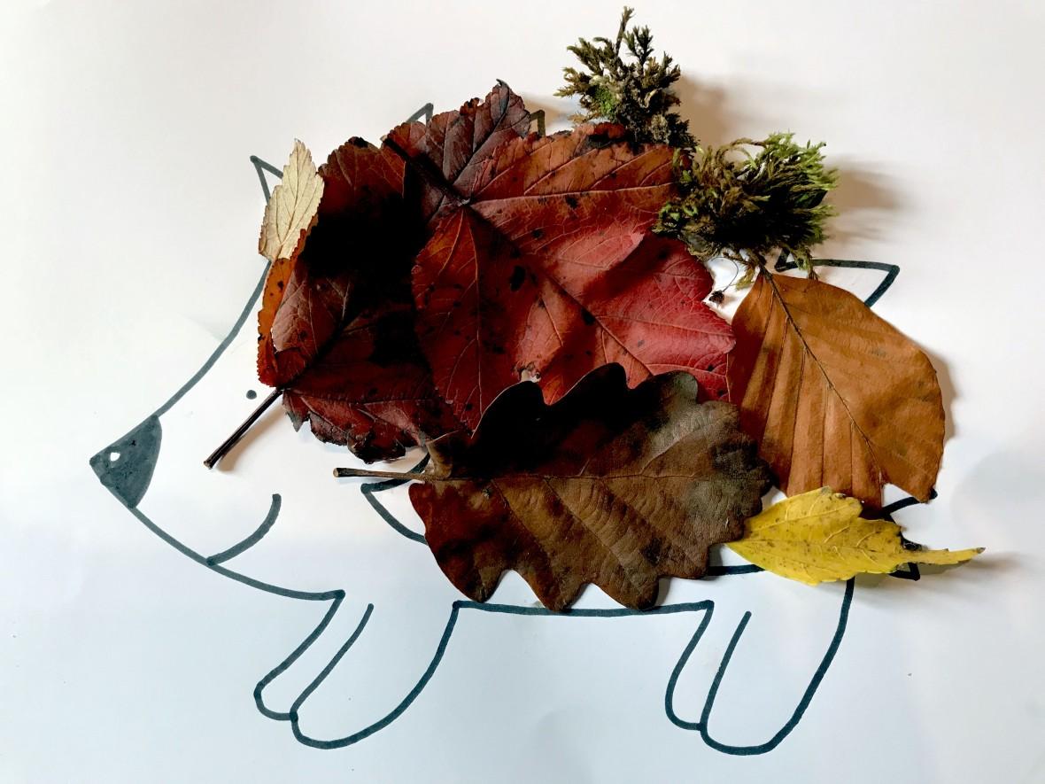 hérisson-automne-feuille-activité